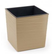 Юка Джуто Капучино пластиковый горшок с вкладкой