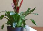 Горшки для цветов Ливингрин
